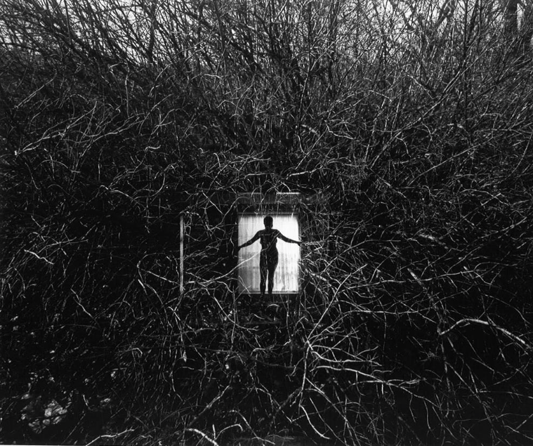 Harry Callahan. 1951. Eleanor