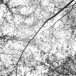 forest-1217814_960_720